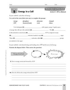 ATP in a Molecule Worksheet