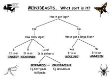 Minibeasts: What Sort is It? Worksheet