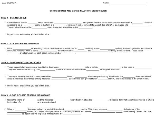 of Genes And Chromosomes Worksheet - Sharebrowse