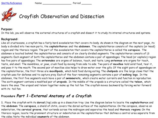 Crayfish Observation and Dissection 8th 10th Grade Lesson Plan – Crayfish Dissection Worksheet Answers