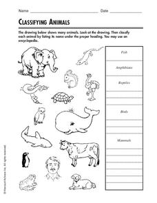 classifying animals worksheet for 3rd 4th grade lesson planet. Black Bedroom Furniture Sets. Home Design Ideas