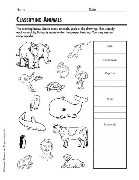 classifying animals worksheet for 3rd 4th grade lesson. Black Bedroom Furniture Sets. Home Design Ideas