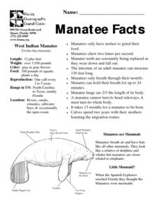 Manatee Facts Lesson Plan
