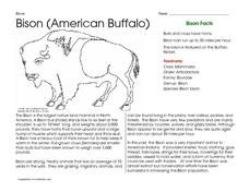 Bison (American Buffalo) Worksheet