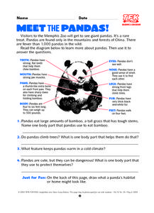 Meet the Pandas Lesson Plan