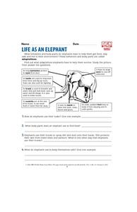 Life as an Elephant Lesson Plan
