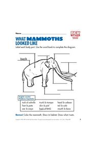 What Mammoths Looked Like Lesson Plan