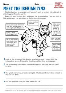 Meet the Iberian Lynx Lesson Plan