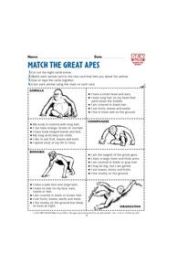 Match the Great Apes Lesson Plan