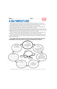 A Sea Turtle's Life Lesson Plan