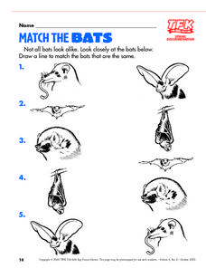 Match the Bats Lesson Plan