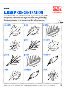 Leaf Concentration Lesson Plan