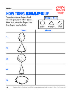 How Trees Shape Up Lesson Plan