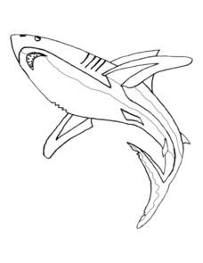 Shark Picture Worksheet