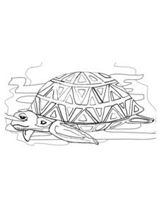 Sea Turtle Picture Worksheet