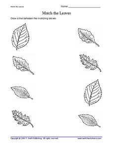 Match the Leaves Worksheet