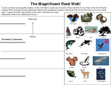 The Magnificent Food Web! Worksheet