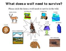 What Does a Wolf Need to Survive? Worksheet