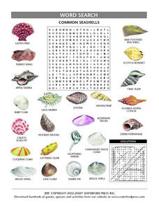 Common Shells Word Search Worksheet Lesson Plan