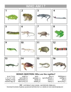 Who Am I? Reptiles and Amphibians Lesson Plan