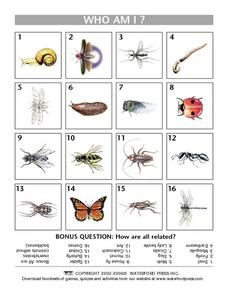 Who Am I?  Invertebrates Lesson Plan