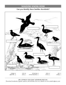 Shadow Know-How: Shorebirds Lesson Plan