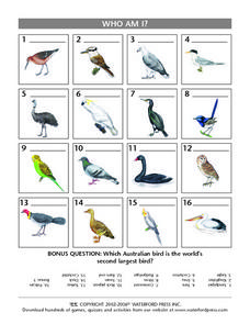 Who Am I?  Species of Birds Lesson Plan