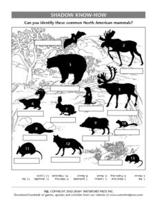 Shadow Know-How- Identifying North American Mammals Lesson Plan