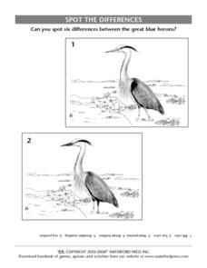 Spot the Differences:  Great Blue Herons Lesson Plan