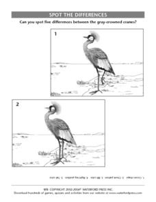 Spot the Differences:  Gray-Crowned Crane Lesson Plan