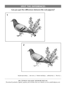 Spot the Differences:  Rock Pigeons Lesson Plan