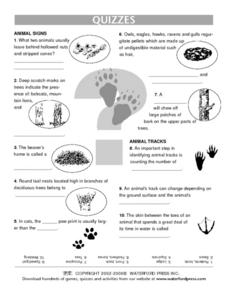 Quiz:  Forest Animals Lesson Plan