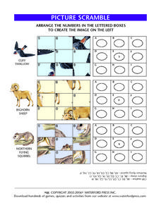 Picture Scramble: Cliff Swallow, Bighorn Sheep, Northern Flying Squirrel Lesson Plan