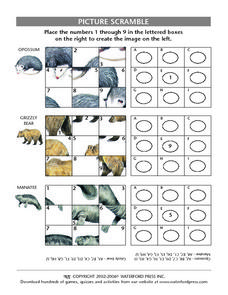 Picture Scramble: Opossum, Grizzly Bear, Manatee Lesson Plan