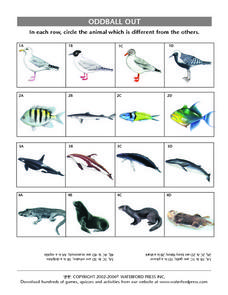 Oddball Out:  Birds, Fishes, Marine Mammals Lesson Plan