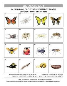 Oddball Out- Finding the Item that Does Not Belong- Invertebrates Lesson Plan