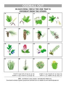 Oddball Out: Plants Lesson Plan