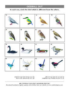 Oddball Out:  Different Birds Lesson Plan