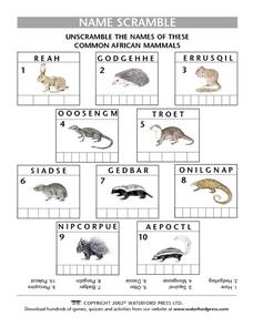 Name Scramble: Common African Mammals Lesson Plan