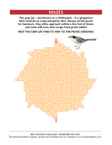 The Gray Jay Maze Worksheet