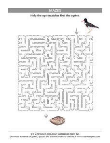 Oystercatcher Maze Worksheet