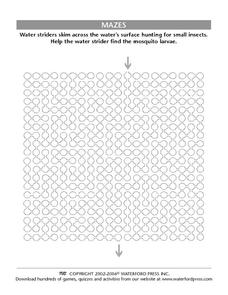 Water Strider Maze Worksheet