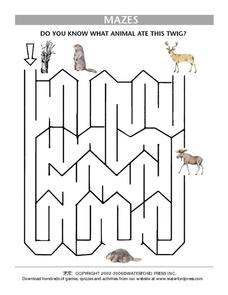 Mazes: Which Animal Ate this Twig? Worksheet