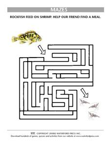 Help the Rockfish Find a Meal of Shrimp- Maze Lesson Plan