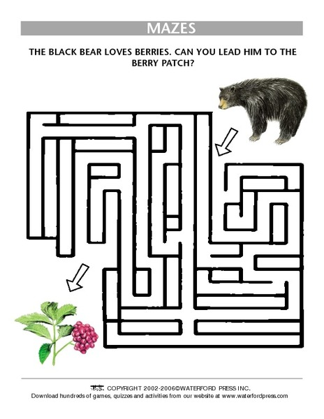 black bear berry maze worksheet for 3rd