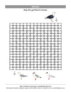 Gull Maze Worksheet