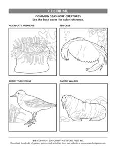 Color Me: Seashore Creatures Lesson Plan