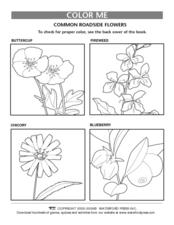 Color Me: Roadside Flowers Lesson Plan