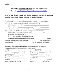 Neuroscience for Kids Worksheet