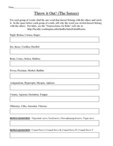 Throw it Out! (The Senses) Worksheet